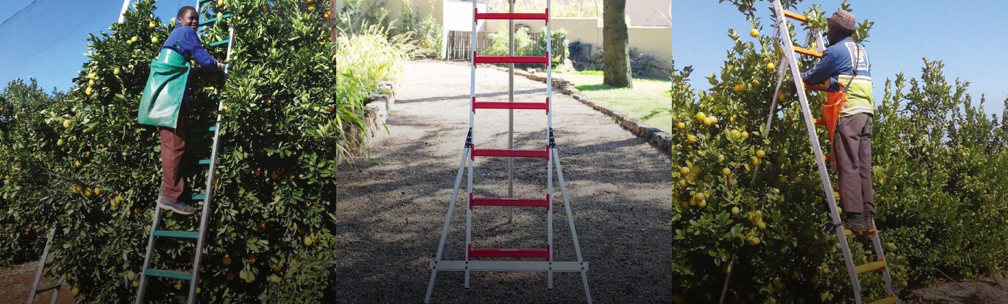 Fruit picking ladders robust, light & innovative ladders